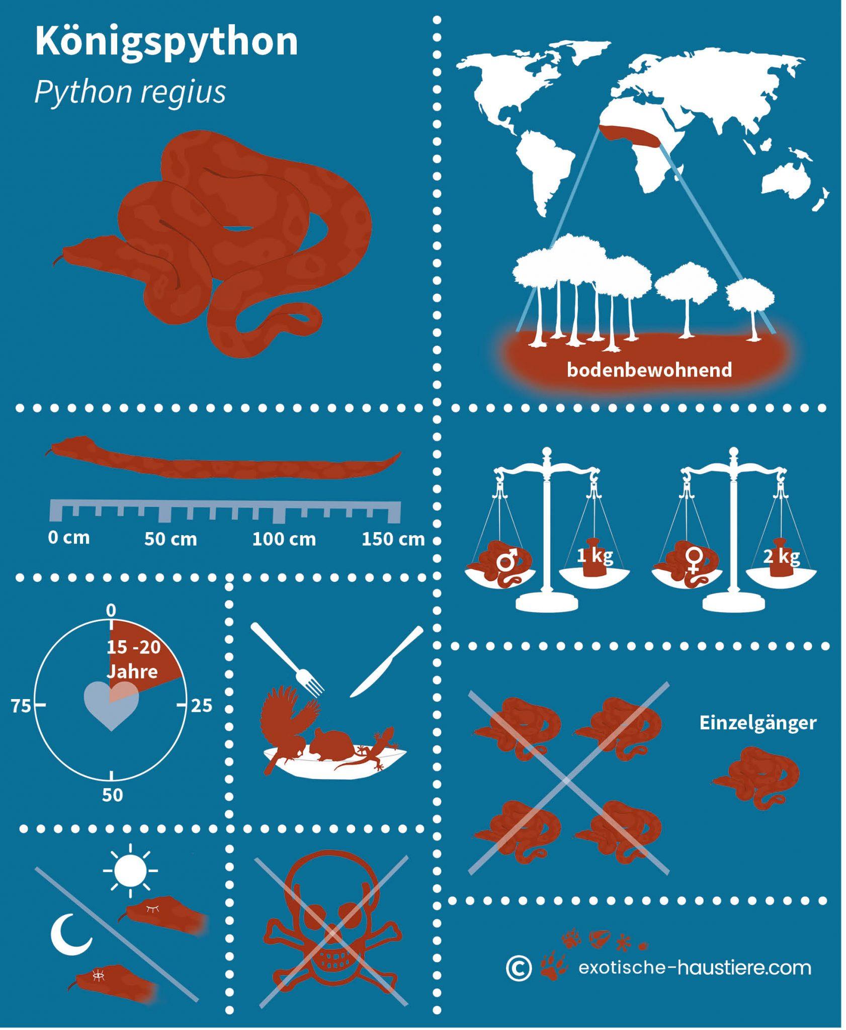 Eine Infografik zur Königspython Haltung