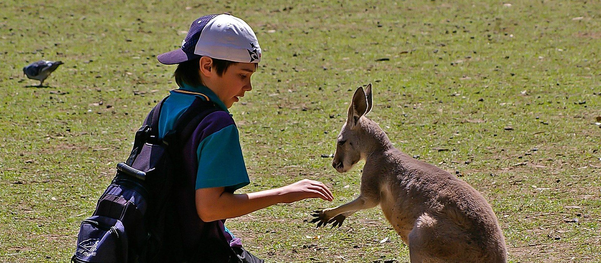 Wallaby kaufen