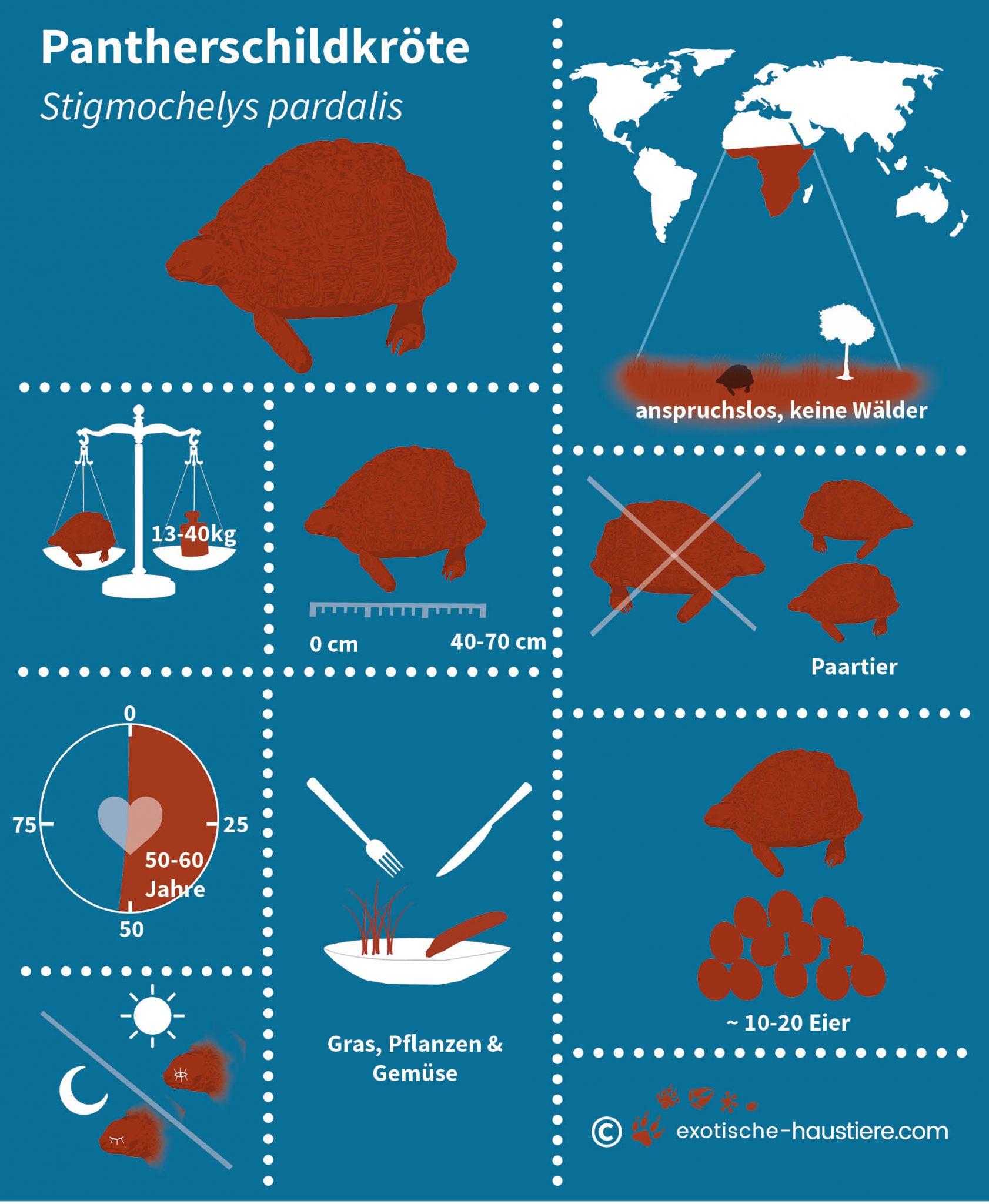 Infografik zur Pantherschildkröten Haltung