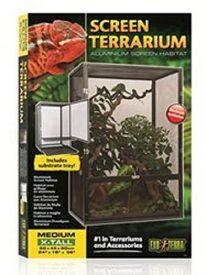Terrarium Chamaeleon Gaze