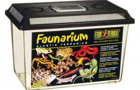 Bartagame faunabox
