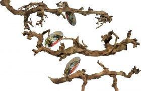 Strumpfbandnatter Holz