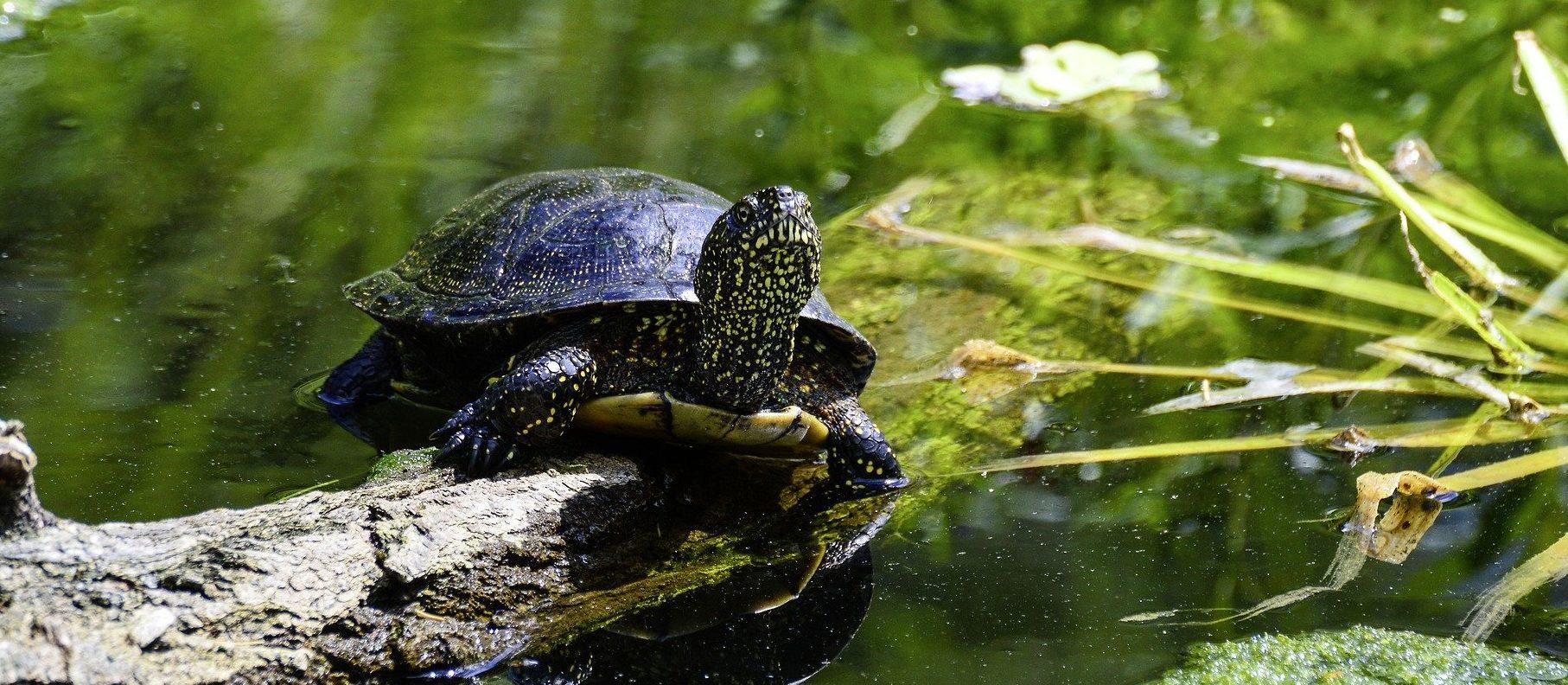 Wasserschildkröten Ernährung