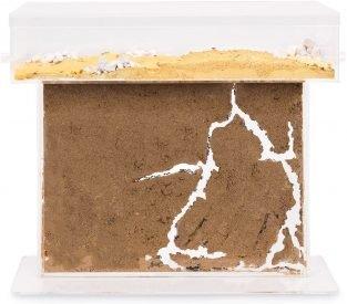Ameisen Terrarium